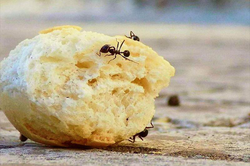 Was Hilft Gegen Ameisen Der Informant